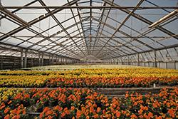 Subsidieregeling glastuinbouw uitgebreid