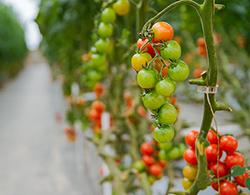 Duurzamere-landbouw